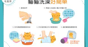 【喵喵洗香澎】洗貓總像戰爭嗎?5步驟教你輕鬆洗貓貓!