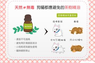 【天然≠無毒】茶樹精油應避免使用在狗狗貓貓身上喔!
