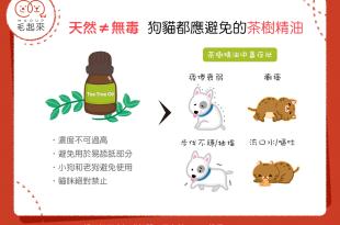 【天然≠無毒】茶樹精油應避免使用在狗狗貓貓身上!