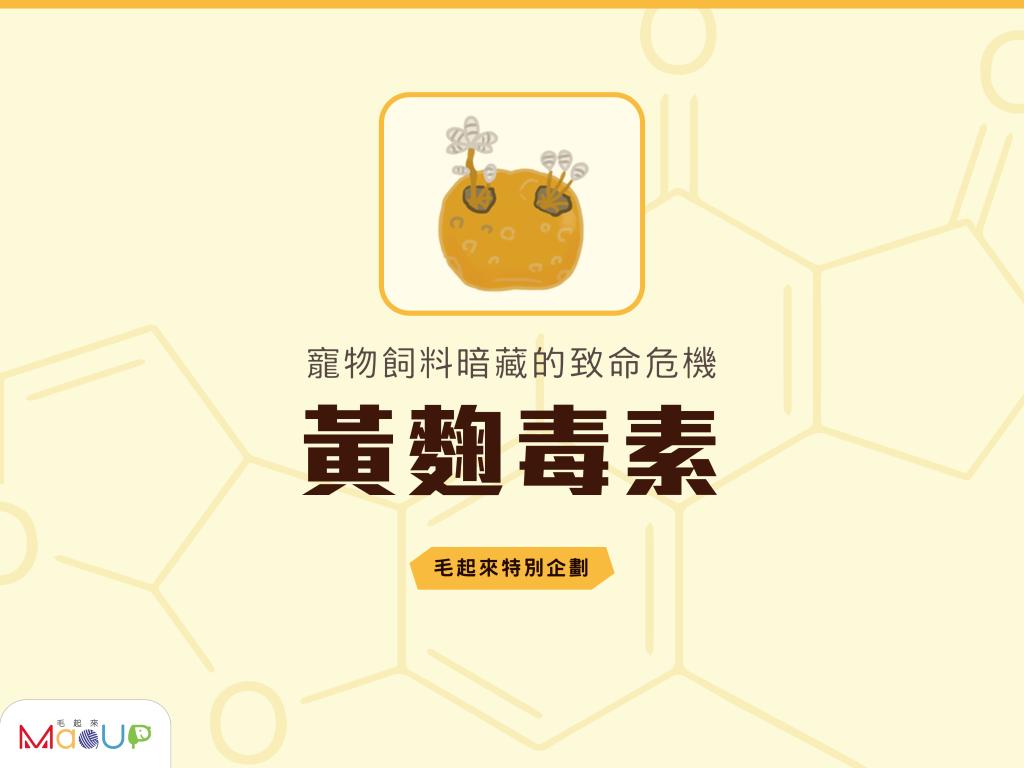 【毛起來特別企劃】寵物飼料暗藏的致命危機——黃麴毒素!