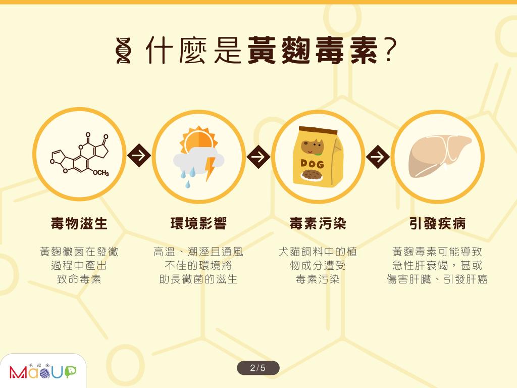 什麼是黃麴毒素? 毒物孳生→環境影響→毒素汙染→引發疾病