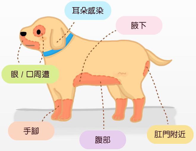 狗狗異位性皮膚炎的好發部位