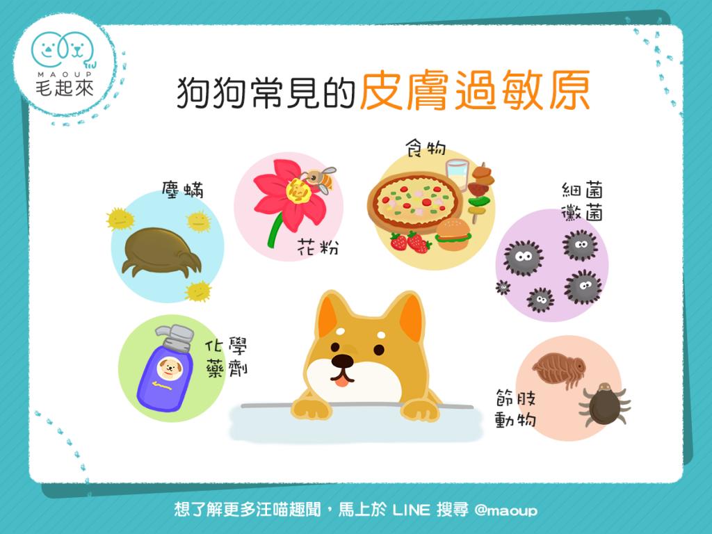 狗狗常見的皮膚過敏原