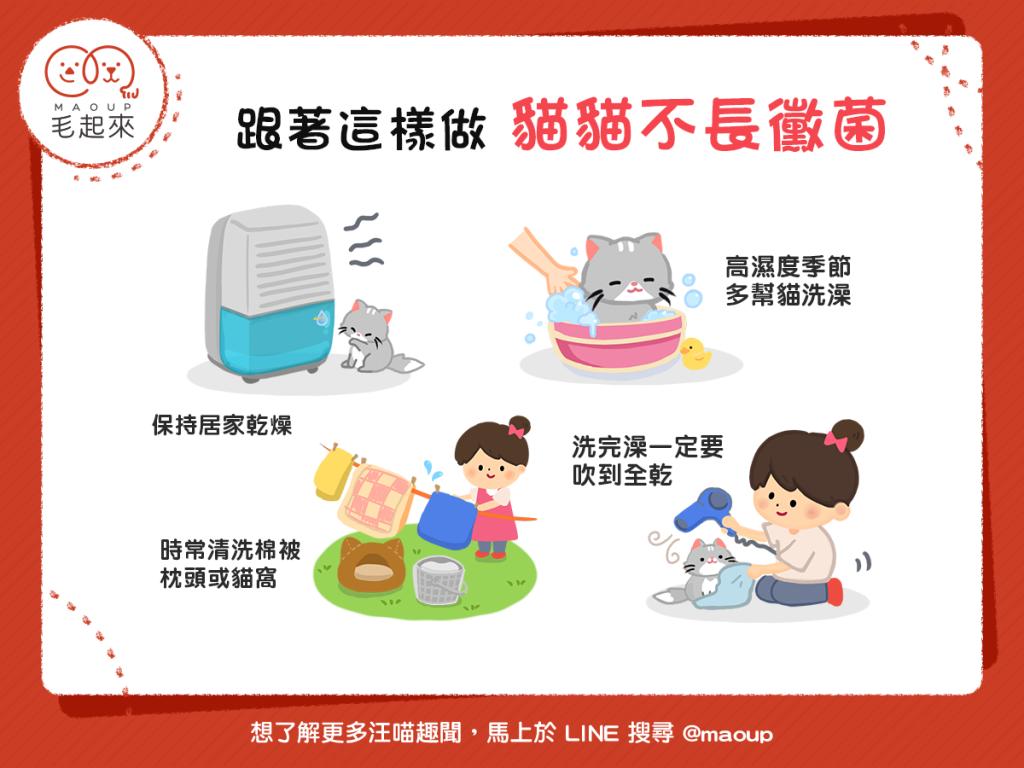 【喵喵康健】你家貓貓「發黴」了嗎?4個告別惱人黴菌的小秘訣!
