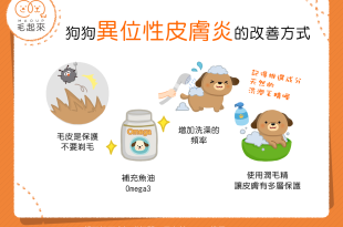 【汪汪康健】狗狗得了異位性皮膚炎怎麼辦?4大改善秘訣報你知!