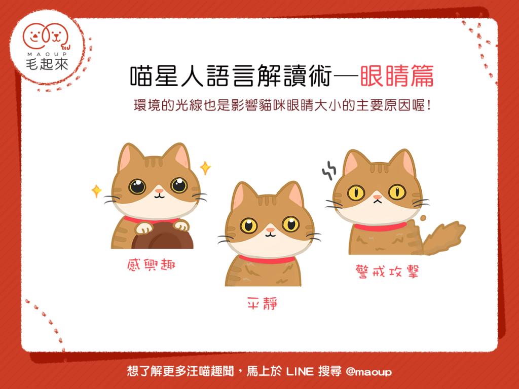 貓咪眼睛代表不同的心情