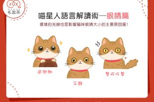 【貓語大揭密!】喵星人語言解讀術~眼睛篇~