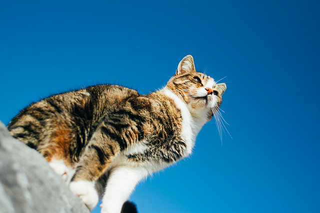 Tsundere Cat in Ephesus