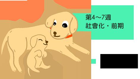 第4~7週 社會化‧前期 從媽媽和手足 學習同伴溝通