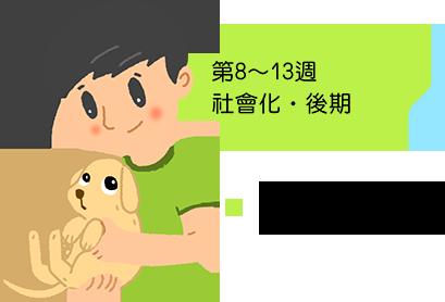 第8~13週 社會化‧後期 8~10週 帶小狗回家最合適
