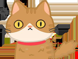 貓咪眼睛瞇成一條線代表處於警戒的攻擊狀態