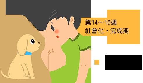 第14~16週 社會化‧完成期 將人類的規則 教導狗狗知道