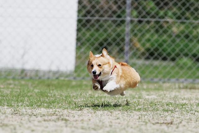 狗狗開心跑跳