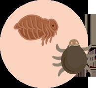 跳蚤、壁蝨