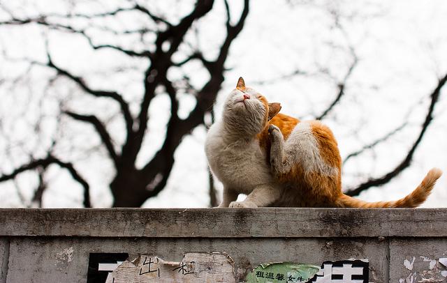 貓咪長黴菌