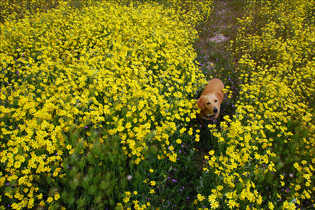 Otto among the daisies