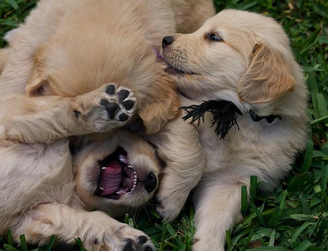 Puppy 057