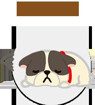狗狗啃咬骨頭危險牛皮骨暗藏危險消化不良