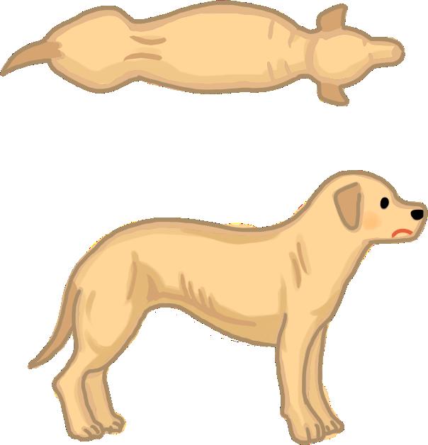 狗狗體型過瘦