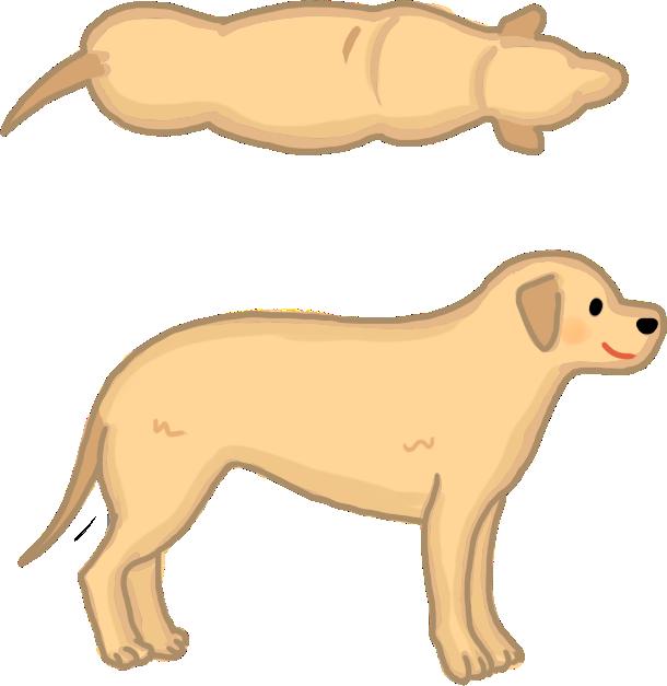 狗狗體型標準