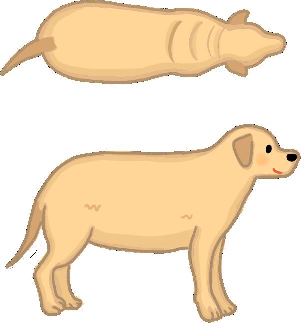 狗狗體型過胖