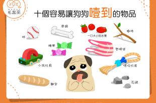 【狗主注意報】狗狗老是黑白咬?!小心這10種東西噎到狗狗!