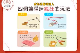 【我要成為逗貓王!】4個讓貓咪瘋狂的逗貓棒玩法
