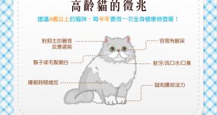 【喵喵豆知識】貓主子老了嗎?!高齡喵喵的6大徵兆