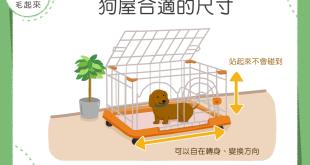 【汪汪家居】狗屋越大越好嗎?剛剛好才能給狗狗安全感喔!