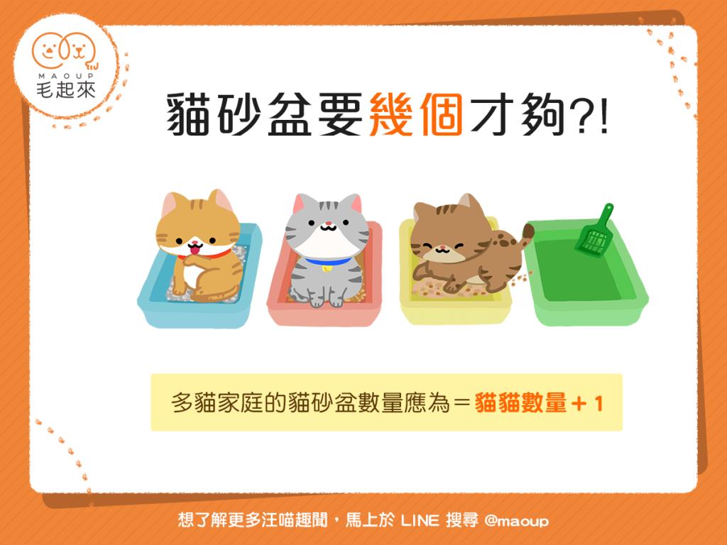 【喵喵家居】多貓家庭的貓砂盆,要多少個才不會「供不應求」?
