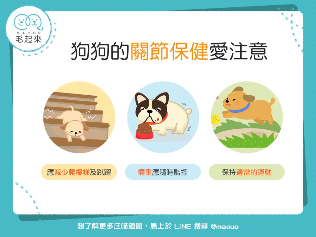 【汪汪康健】狗狗跑跳好開心!3個關節的日常保健法!
