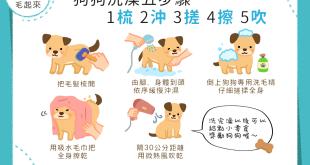 【汪汪洗香澎】梳、沖、搓、擦、吹!5字口訣輕鬆洗狗狗!