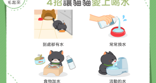 【汪喵餵養知識】貓貓不愛喝水怎麼辦?4 招讓貓貓愛上喝水!