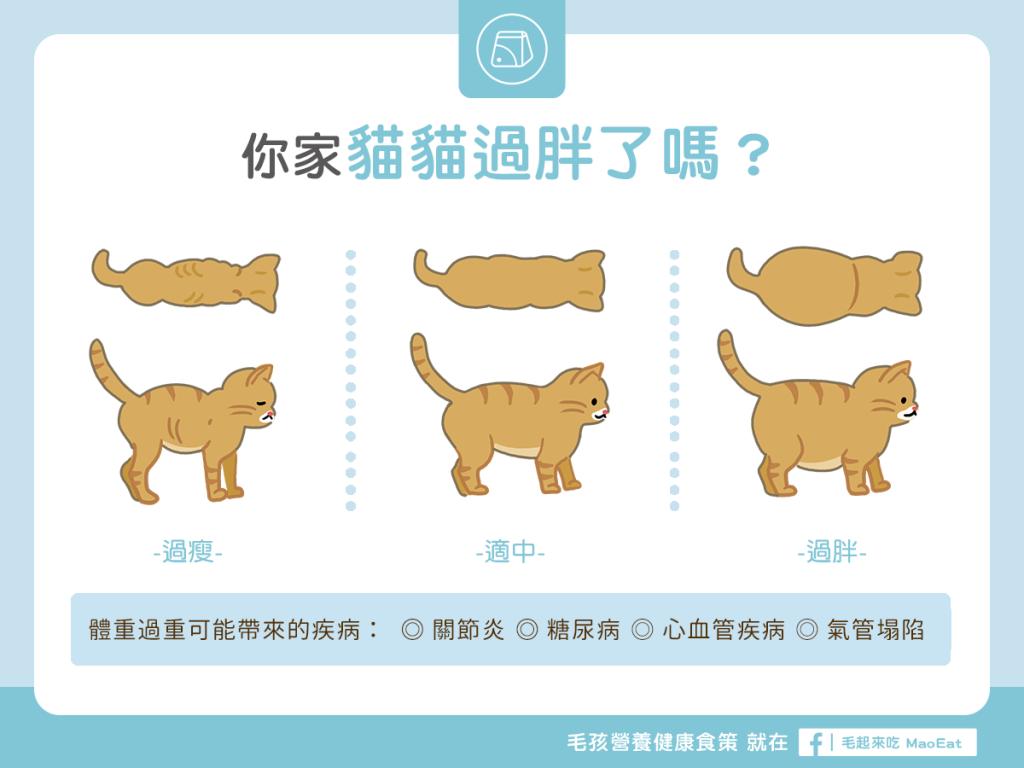 【肥胖汪喵飲食】你家貓咪過胖了嗎?體型比一比!
