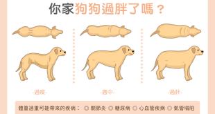 【肥胖汪喵飲食】你家狗狗過胖嗎?體型比一比!