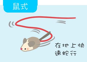 鼠式 在地上快速蛇行