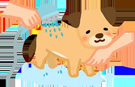 2.幫狗狗從腳、身體、頭,依序沖濕