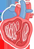 發育為成蟲,寄生於心臟