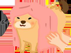 4. 幫狗狗用吸水毛巾擦乾全身