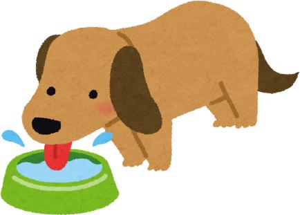 狗狗只愛玩水不喝水簡單4招讓狗狗多喝水水碗每天勤清洗喝水當作玩遊戲增加食物含水量多多運動愛喝水
