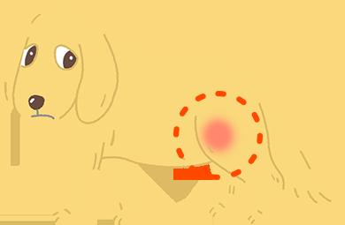 狗狗的關節炎