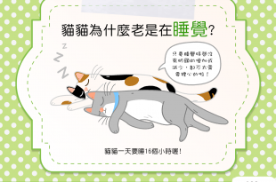 【家有愛睏貓】貓貓為什麼無時無刻都在睡?難道是生病了嗎?