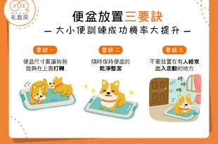 【狗狗在家「不方便」?】如廁訓練好困難?便盆擺放有訣竅!