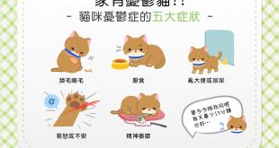 【家有憂鬱貓】以為貓咪「獨立自主」嗎?當心喵喵染上憂鬱症!