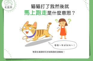 【貓咪行為之七大不可思議】貓貓打了人就快閃是什麼意思?!