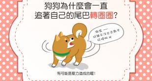 【汪汪行為學】狗狗老是追著自己的尾巴轉圈圈,只是在玩嗎?