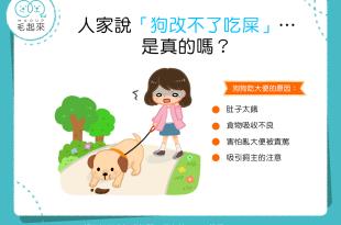 【汪汪行為學】「狗改不了吃屎」?!狗狗為什麼老是吃大便?