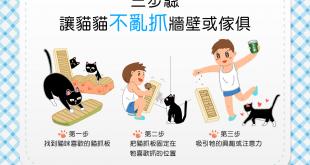 【喵喵訓練術】爪下留情!簡單3步驟~貓貓不再亂抓家具!