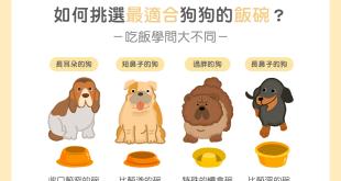 依照不同犬種狗挑選適合食碗