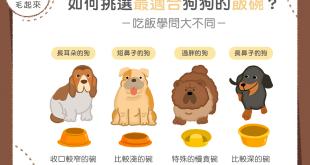 【汪喵餵養知識】開飯囉!快來看看哪種飯碗跟你的狗狗最速配!